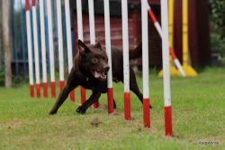Workshop agility