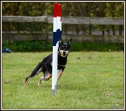 Agility workshop 02-05-2015